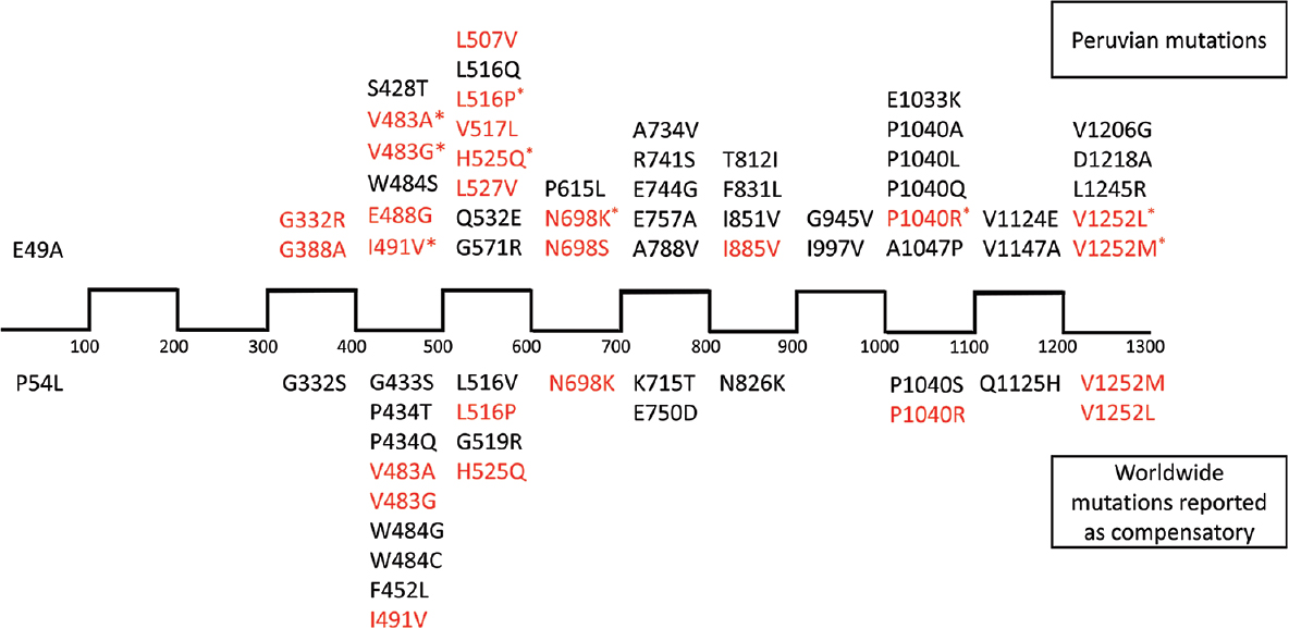 Figure 4: Linear distribution of the identified putative rpoC compensatory mutations throughout the protein sequence (scale: 100 amino acids per space). The upper part of the image lists the mutations found in our analysis, while the lower part shows mutations reported in the scientific literature. Mutations in red are those already reported elsewhere, but not necessarily underwent experimental confirmation of compensatory behavior. Upper mutations marked with an asterisk (*) are those already reported as compensatory by experimental assays